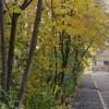 Осень в городе - фотозарисовка