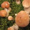 Маринованные белые грибы для гурманов