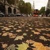 Самая красивая осенняя дорога – Лондон, октябрь, дорожные работы …