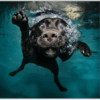 Мокрые и смешные – фото ныряющих собак Сета Кастила